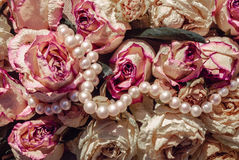 Dried roses and pearls royalty free stock image