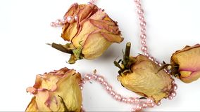 Dried Roses stock video footage