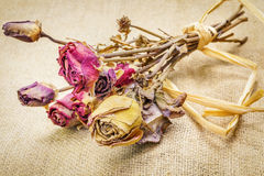 Dried roses on rustic jute fabric Royalty Free Stock Image