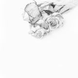 Dried roses stacking. Black and white photo image. Stock Photo