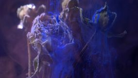Dried roses standing underwater and blue and pink color inks pouring with smoke diffusion on black background. Dried roses standing underwater and blue and pink stock footage