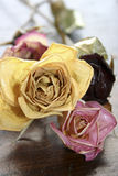 Dried Roses on Table. Yellow, burgundy and Pink roses that have been dried with a protective finish Royalty Free Stock Images