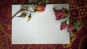 Dried rose buds and flowers with a card and room for text. Dried Roses on top of a white card for text Royalty Free Stock Images