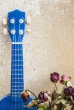Dried roses and ukulele at wall. Stock Image