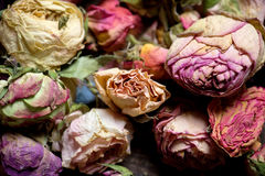 Dried roses. Valentines background. Stock Photos