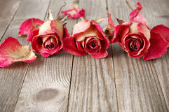 Dried roses on wood Stock Images