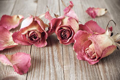Dried roses on wood Stock Photos