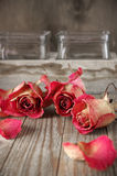 Dried roses on wood Royalty Free Stock Photo
