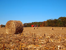 Dried Round Bale in Corn Field Royalty Free Stock Image