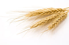Dried rye Royalty Free Stock Images