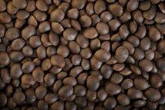 Dried sacha inchi Stock Images