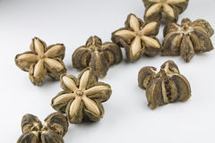 Dried sacha inchi Stock Photo