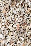 Dried Sage Royalty Free Stock Photos