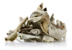 Dried Sage Tea. Dry Sage tea on white background Royalty Free Stock Images