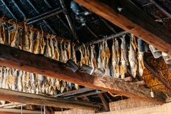 Dried salmons inside house of Shiraoi Ainu Village Museum in Hokkaido, Japan Royalty Free Stock Photography