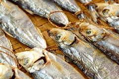 Dried salt Fish Royalty Free Stock Photography