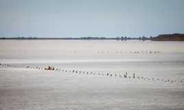 The dried salt lake Royalty Free Stock Images