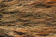 Dried salt marsh sea grass Royalty Free Stock Photo
