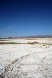 Dried salt mud flats. In the desert causing white shell like forms and mountains in the background with tire tracks Stock Images