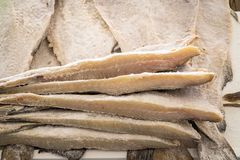 Dried salted cod at farmers market royalty free stock photos