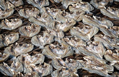 Dried Salted Fish Stock Photography