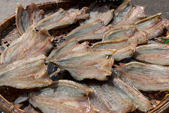 Dried Salted Fish. Royalty Free Stock Image