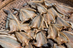 Dried Salted Fish. Royalty Free Stock Photos