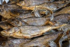 Dried salted fish vobla lies on the counter for sale royalty free stock image