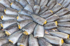 Dried salted snake skin gourami fish Stock Photography