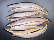 Dried salted Spotfinned spinyeel - Macrognathus siamensis. Stock Image