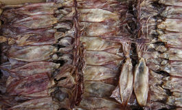 Dried Salted Squid Royalty Free Stock Images