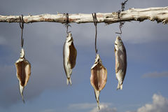 Dried salted whitefish outdoors. Lake Issyk-Kul, Kyrgyzstan Stock Photography