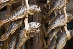 Dried salty fish hanging Stock Photo