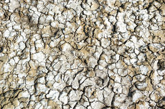 Dried salty land Royalty Free Stock Images