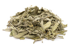 Dried Salvia Stock Images