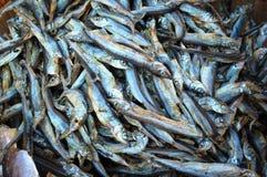 Dried Sardines Royalty Free Stock Photos