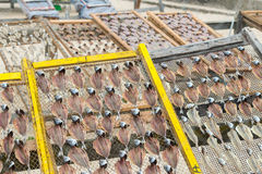 Dried sardines in Nazare (Portugal) Stock Image