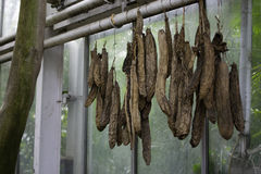 Dried sausages. Hanging on a pipe stock photos