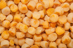 Dried scallops Royalty Free Stock Photos