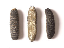 Dried sea cucumber Royalty Free Stock Image