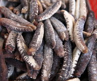 Dried sea cucumber Stock Photography