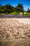 Dried Sea Cucumbers Royalty Free Stock Photos