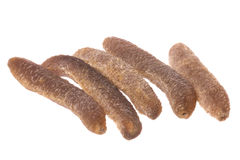 Dried Sea Cucumbers Isolated Stock Photo