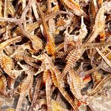 Dried sea horses Chinese traditional medicine, China. Dried seahorses for sale at the market of Guangzhou, China. An alternative Chinese traditional medicine &# stock photo