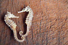 dried seahorse on wooden background Royalty Free Stock Photography