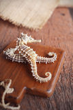 dried seahorse on wooden background Stock Photos