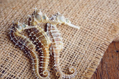 dried seahorse on wooden background Stock Images