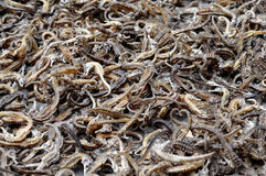 Dried Seahorses Stock Image