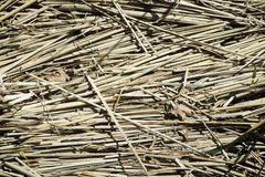 Dried sedge and old dry leaves in the sun in autumn. royalty free stock photos
