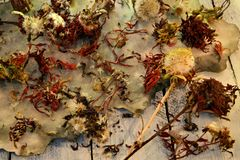 Dried seeds of aster and daisy flowers with pestles and grunge paper on table royalty free stock image